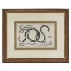 Four Framed Early 19th Century Large Folio Engravings of Lizards, Snakes & Bats