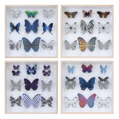 Four Handcut Butterfly Boxes