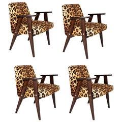 Four Midcentury 366 Armchairs in Leopard Print Velvet, Jozef Chierowski, 1960s