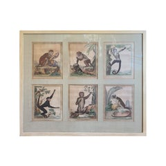 Framed 18th Century French Monkey Engravings by Georges-Louis Leclerc Buffon