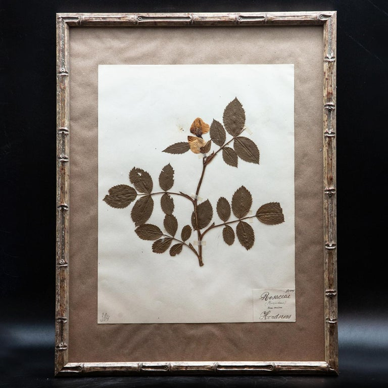 Napoleon III Framed and Pressed French 'Herbier'
