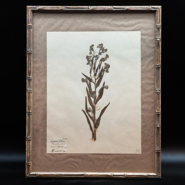 Framed and Pressed French 'Herbier'