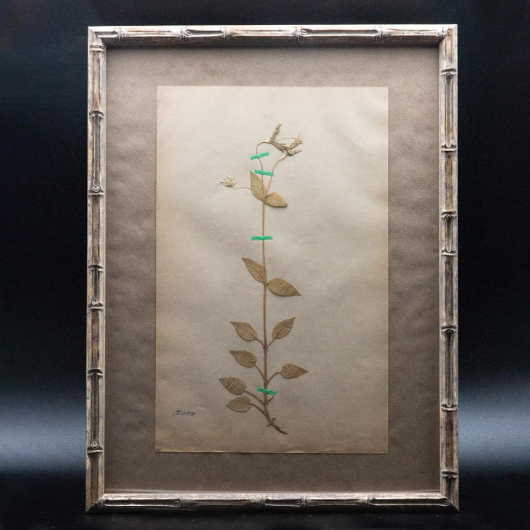 19th Century Framed and Pressed French 'Herbier'