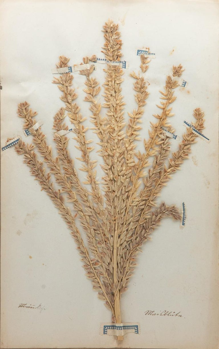 Faux Bamboo Framed and Pressed French 'Herbier'