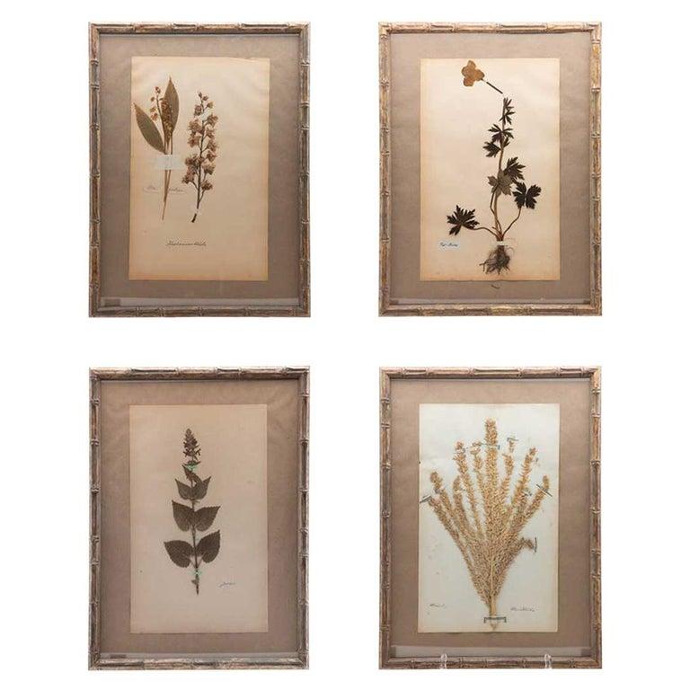 "Framed and Pressed French 'Herbier' ""Pressed Plant"" Specimens"