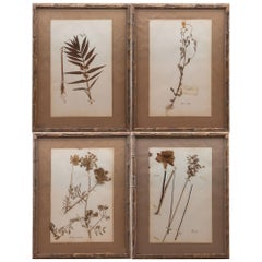 "Framed and Pressed French 'Herbier' ""Pressed Plant"" Specimens"