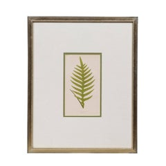 Framed Botanical Fern Illustration, Printed from a Woodblock Published in 1860s