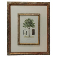 Framed Botanical Print in a Wood Bark Style Frame with Gold Leaf Accents