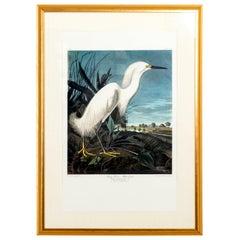 Framed Egret Bird Lithograph by Audobaum