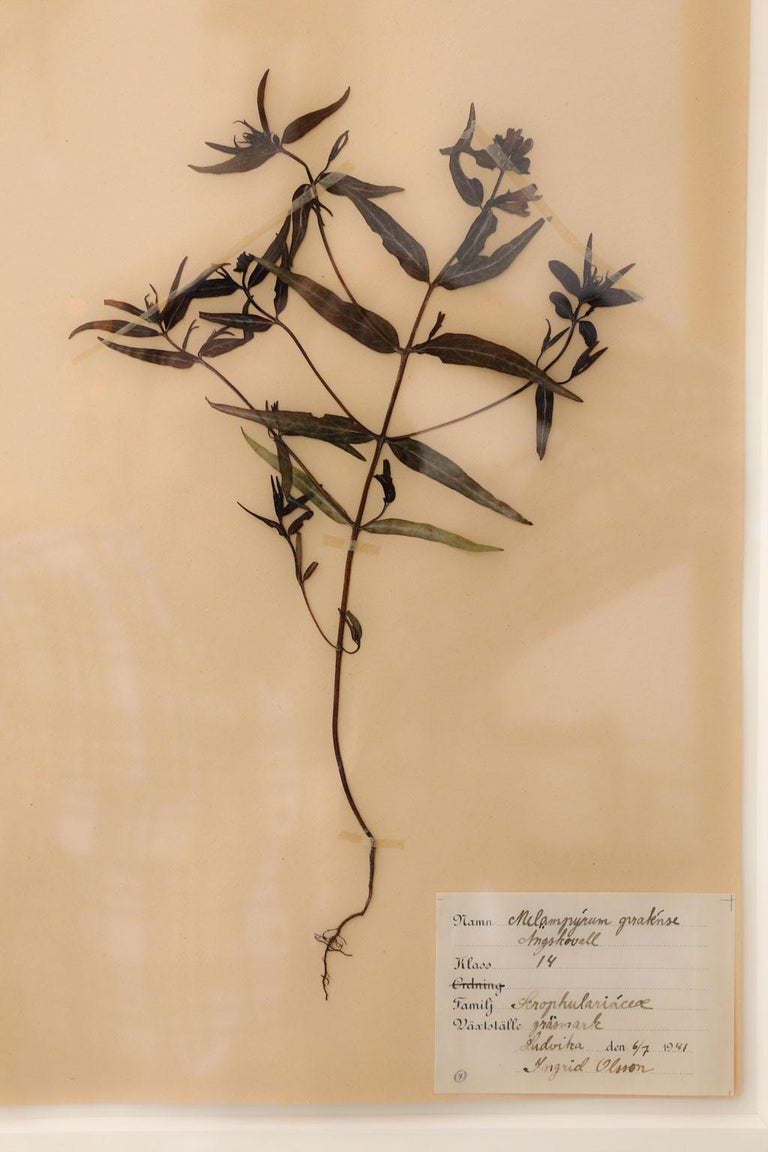 Framed Set of Four Herbaria For Sale 3