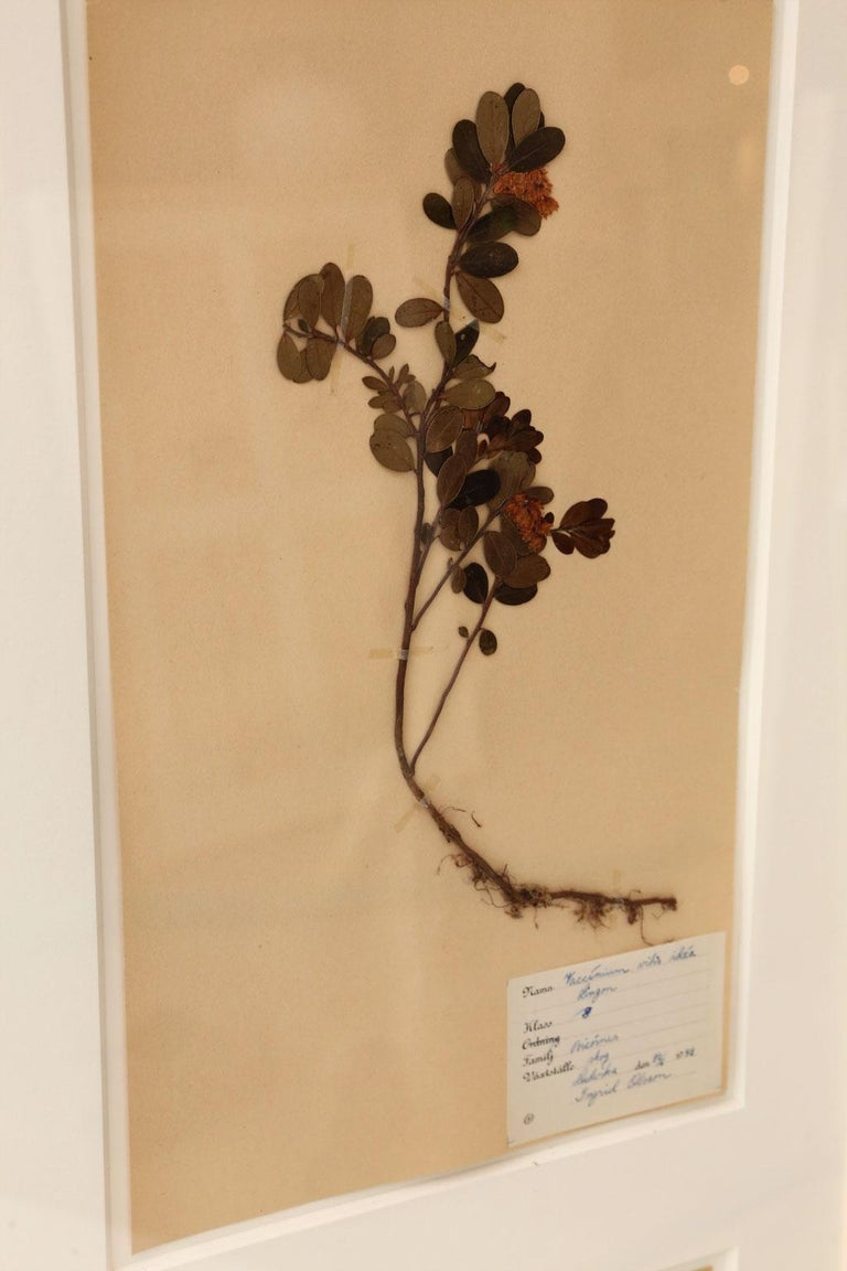 Framed Set of Four Herbaria For Sale 5