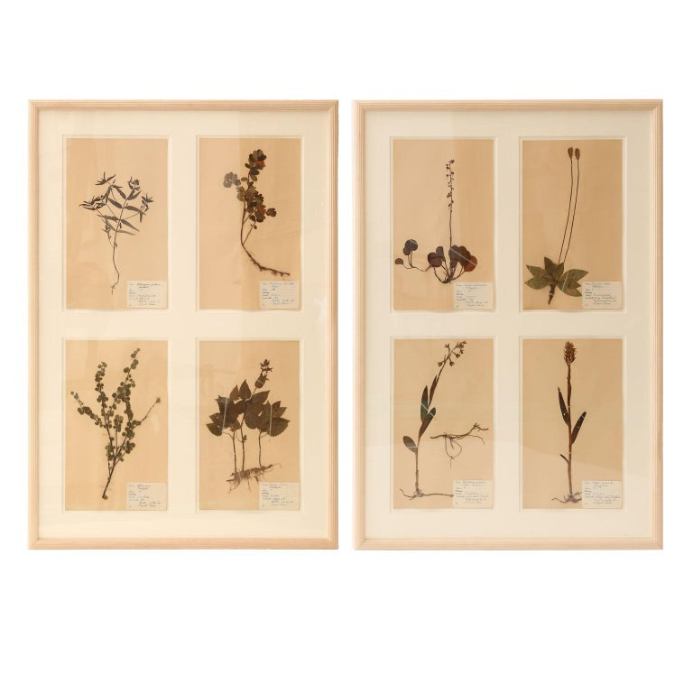 Framed Set of Four Herbaria For Sale 6