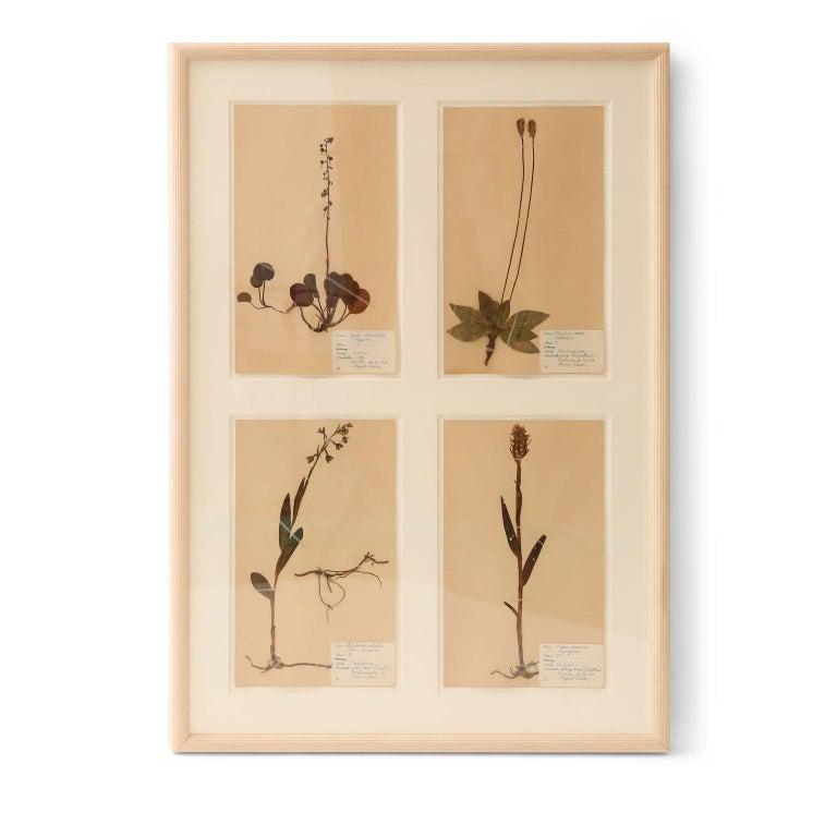 Folk Art Framed Set of Four Herbaria For Sale