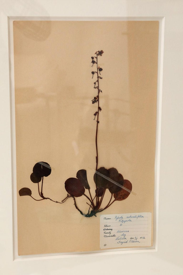 Swedish Framed Set of Four Herbaria For Sale