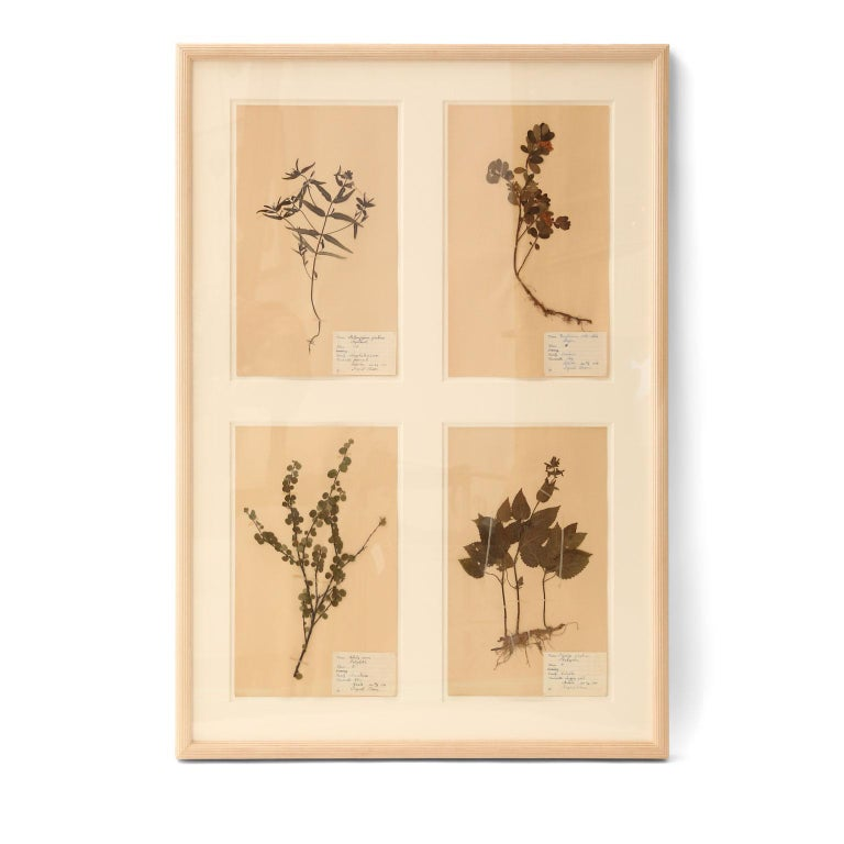 Framed Set of Four Herbaria For Sale 1
