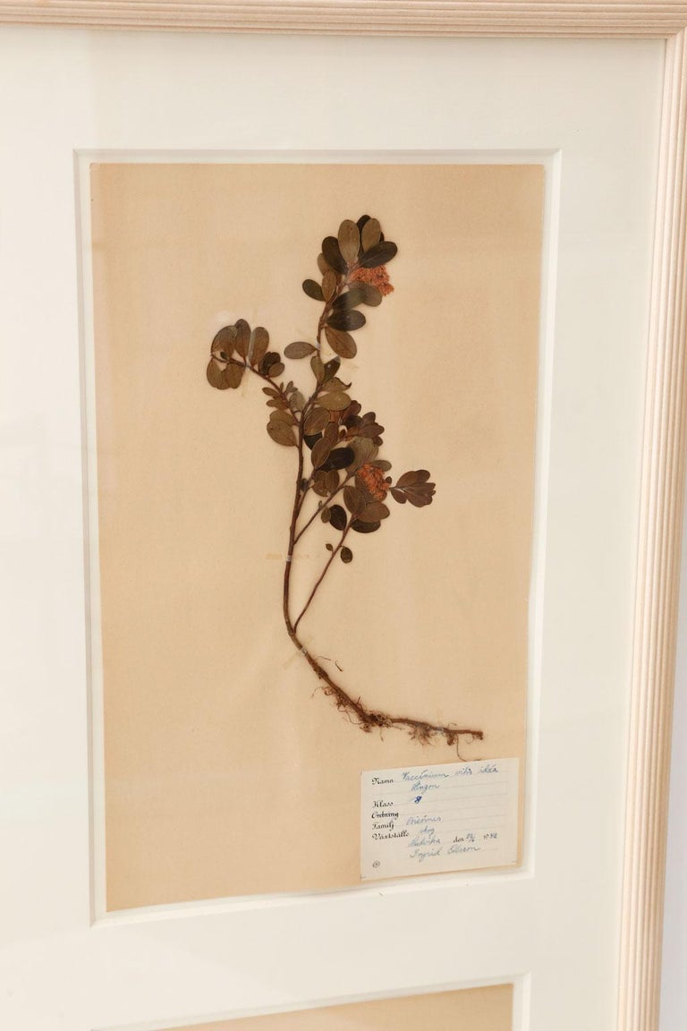 Framed Set of Four Herbaria For Sale 2