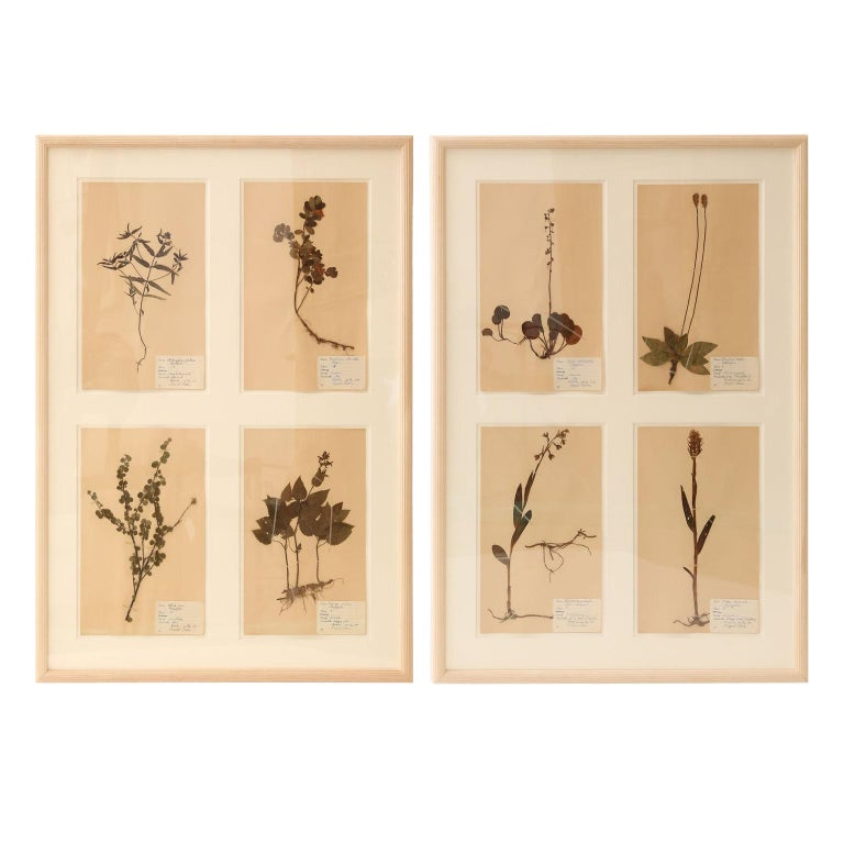 Framed Set of Four Herbaria For Sale