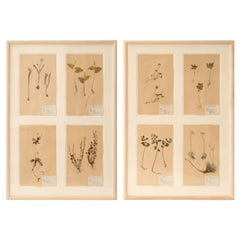 Framed Set of Four Herbaria