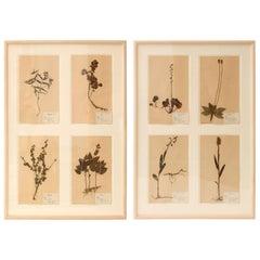 Framed Set of Four Herbaria
