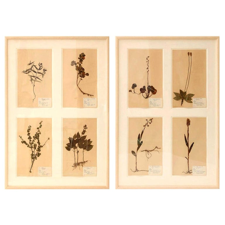 Framed Set of Four Herbaria For Sale 7