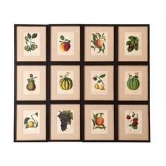 Framed Set of Twelve G. Severyns Fruit Chromolithographs
