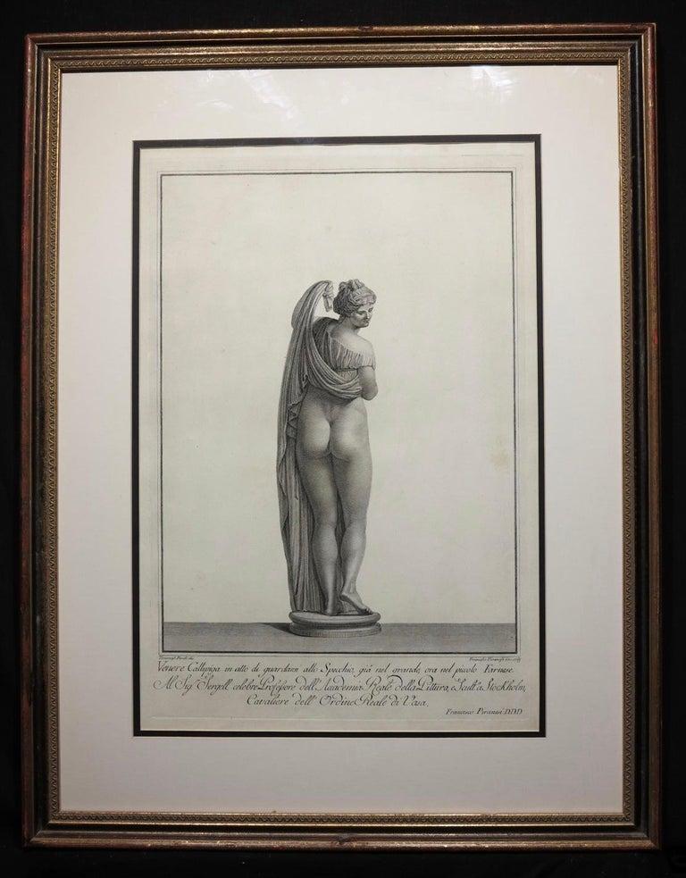 Apollo Belvedere and Venus Callipyge For Sale 8