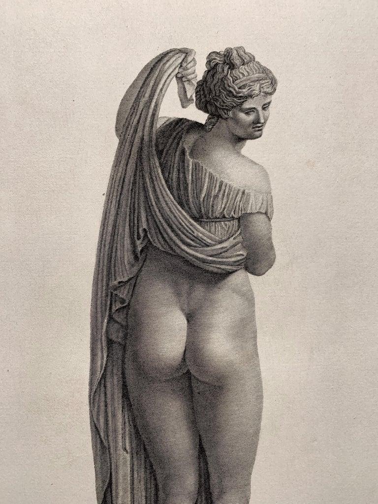 Apollo Belvedere and Venus Callipyge For Sale 4