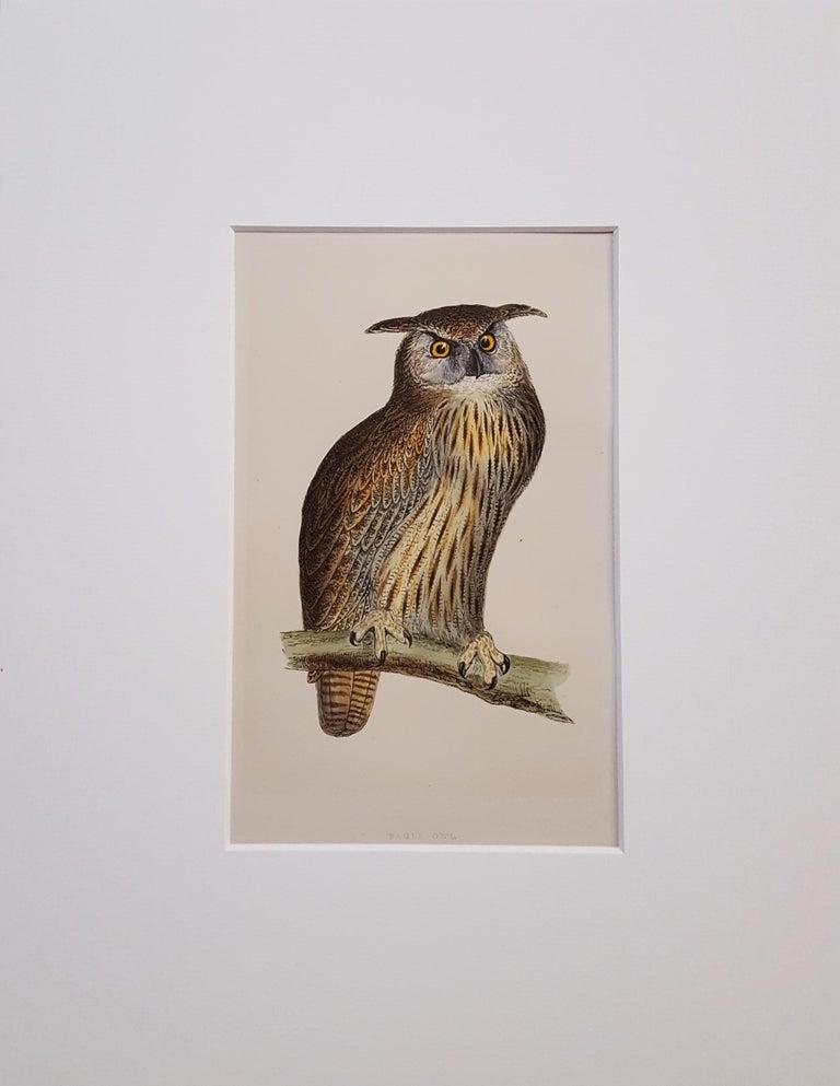 Eagle Owl - Print by Francis Morris