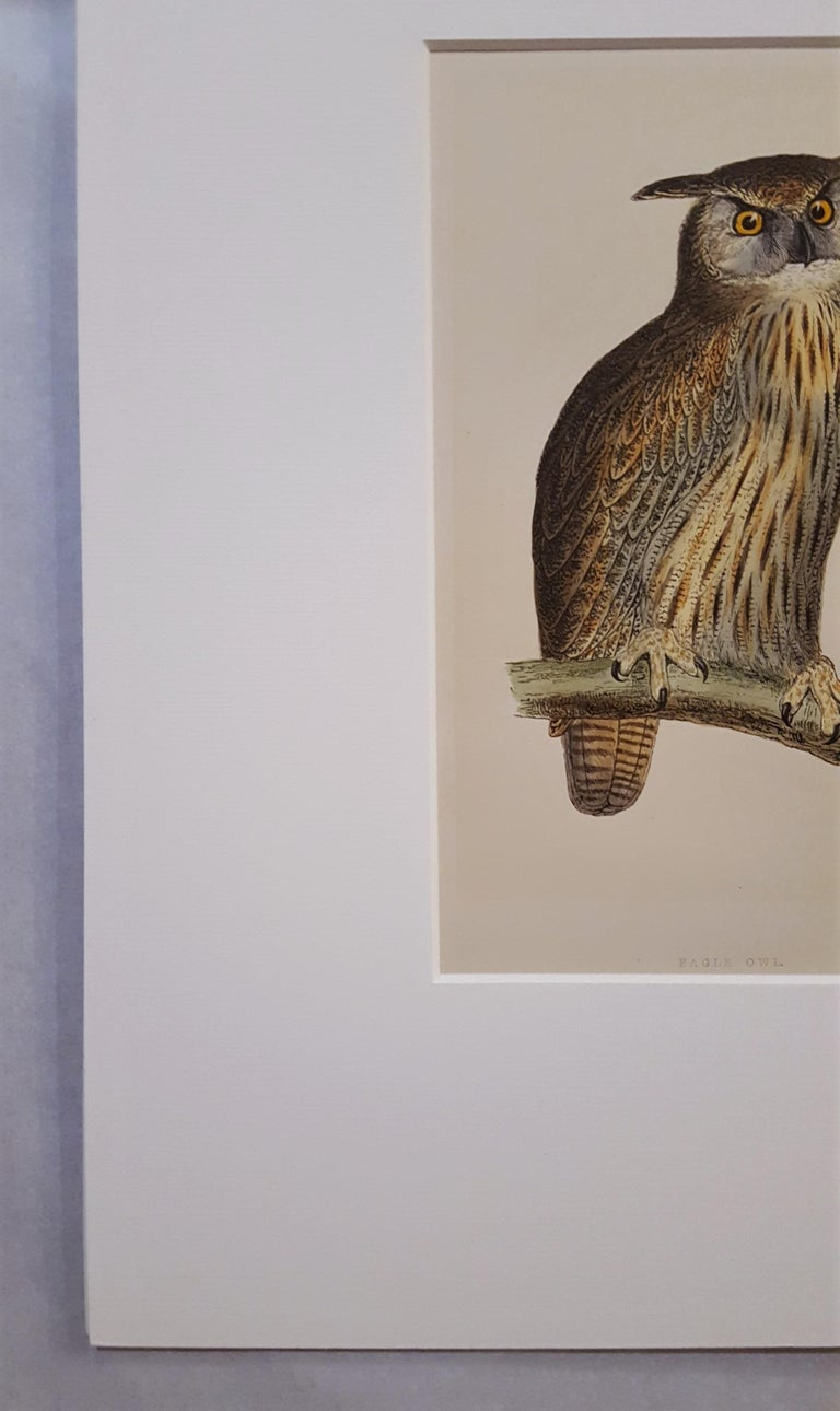 Eagle Owl - Victorian Print by Francis Morris