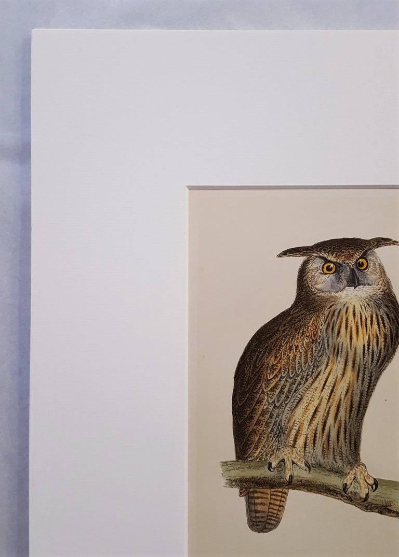 Eagle Owl - Beige Animal Print by Francis Morris