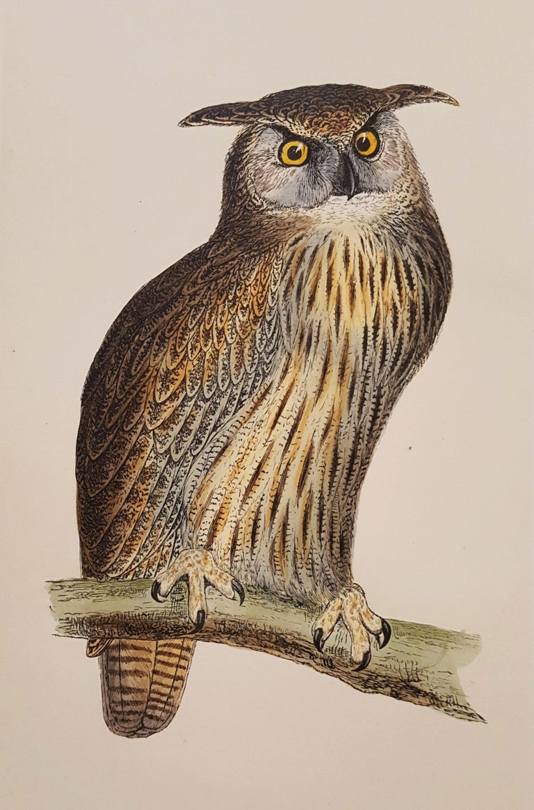 "An original hand-colored engraving on wove paper by Irish artist Francis Morris (1810-1893) titled ""Eagle Owl"", 1856. Comes from Morris's portfolio ""A History of British Birds"" (Vol. V) published by Groombridge and Sons, Paternoster Row, London"