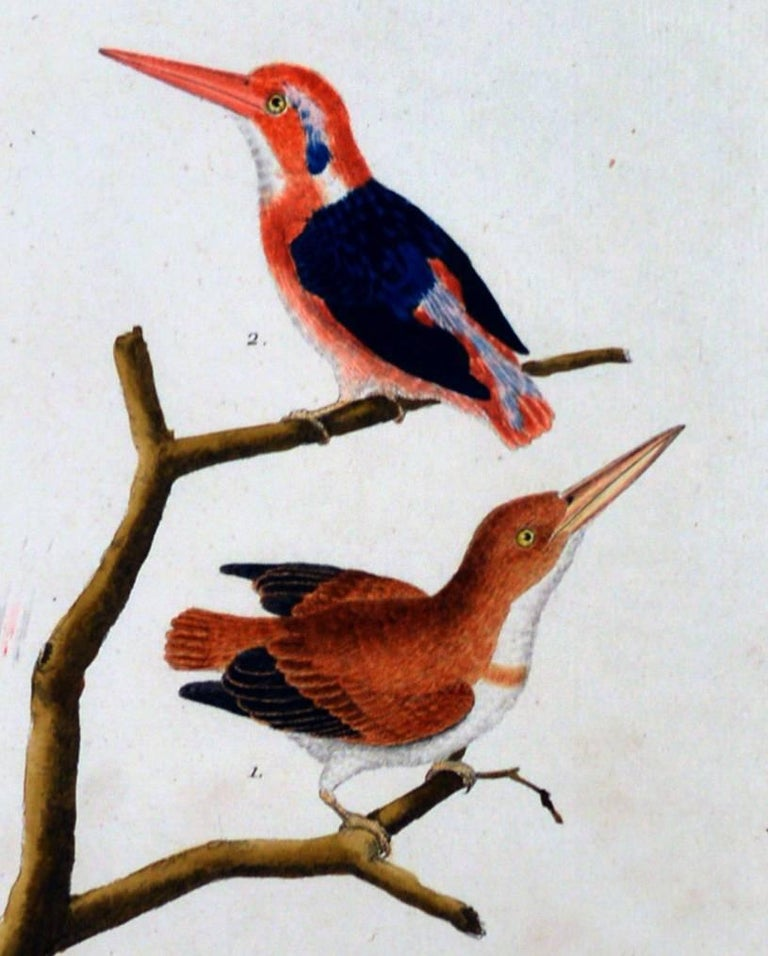 Francois Nicholas Martinet bird engraving, circa 1770.  The framed Francois Martinet engraving is from Buffon's Historie Naturelle des Oiseaux displaed beautifully in a large frame.  Dimensions: 21 3/4 inches high x 13 inches wide x 3/4 inches