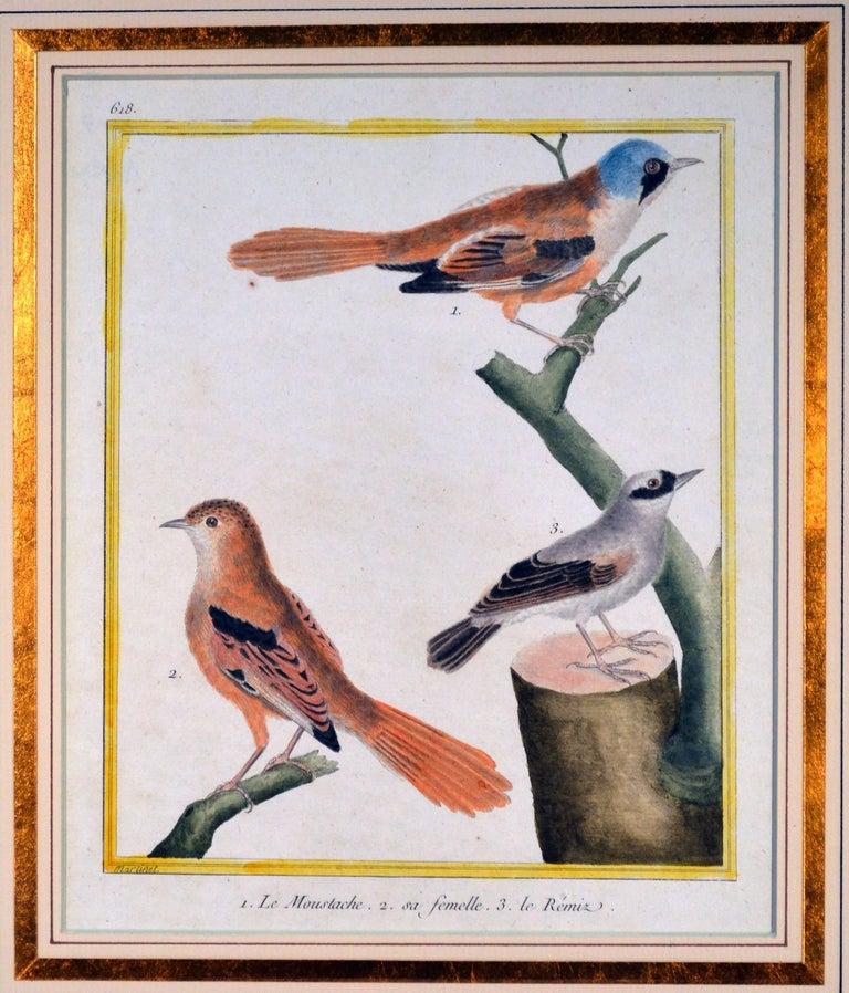 Francois Nicholas Martinet Bird Engravings, Set of Six, circa 1770 For Sale 3