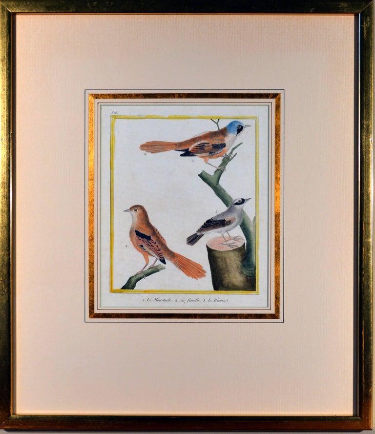Francois Nicholas Martinet Bird Engravings, Set of Six, circa 1770 For Sale 4