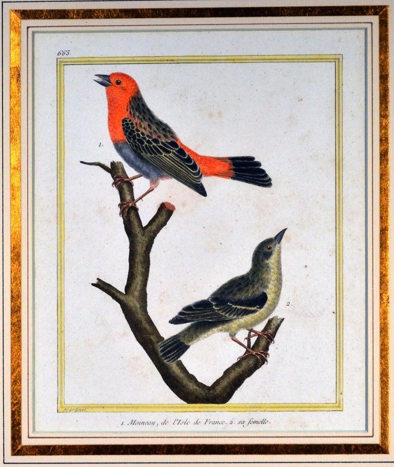 Francois Nicholas Martinet Bird Engravings, Set of Six, circa 1770 For Sale 5