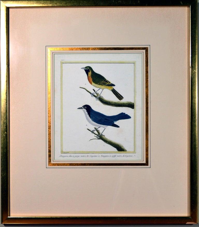 Francois Nicholas Martinet Bird Engravings, Set of Six, circa 1770 For Sale 6