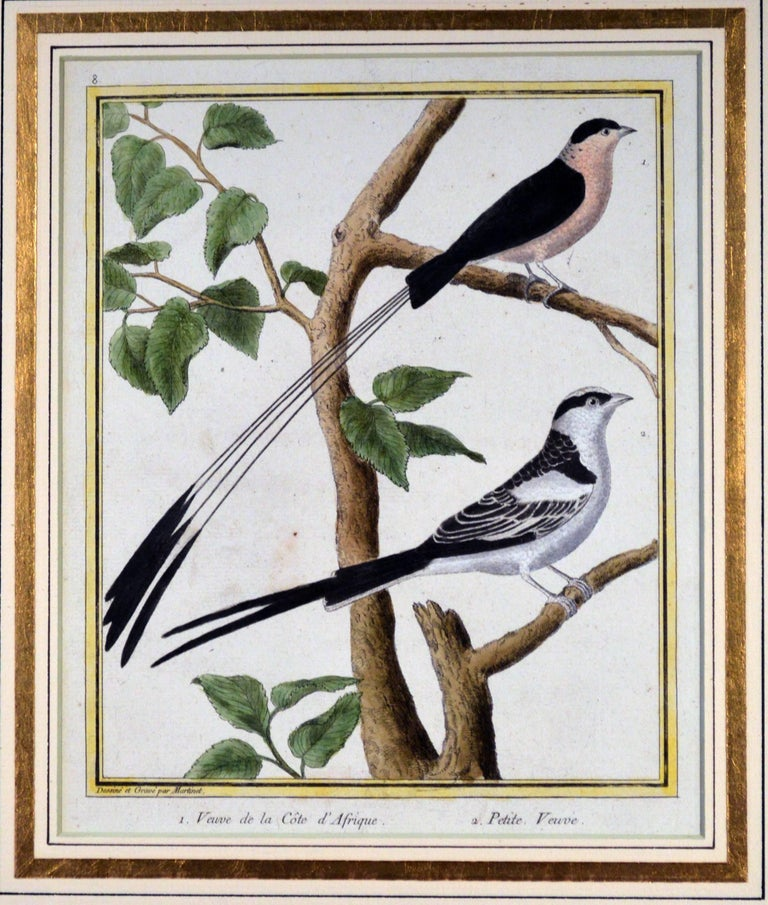 Francois Nicholas Martinet bird engravings, Set of six, circa 1770.  This a set of six but we have another set listed separately which match these to make twelve.  The framed Francois Martinet engravings From Buffon's Historie Naturelle des Oiseaux