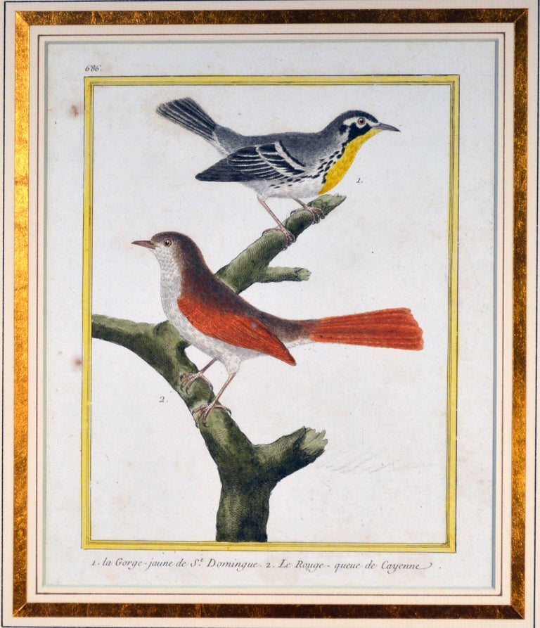 Francois Nicholas Martinet bird engravings,  set of six,  circa 1770.  This is a set of six but we have another set of six with the same frames to make a bigger set of twelve.  The framed Francois Martinet engravings from Buffon's Historie
