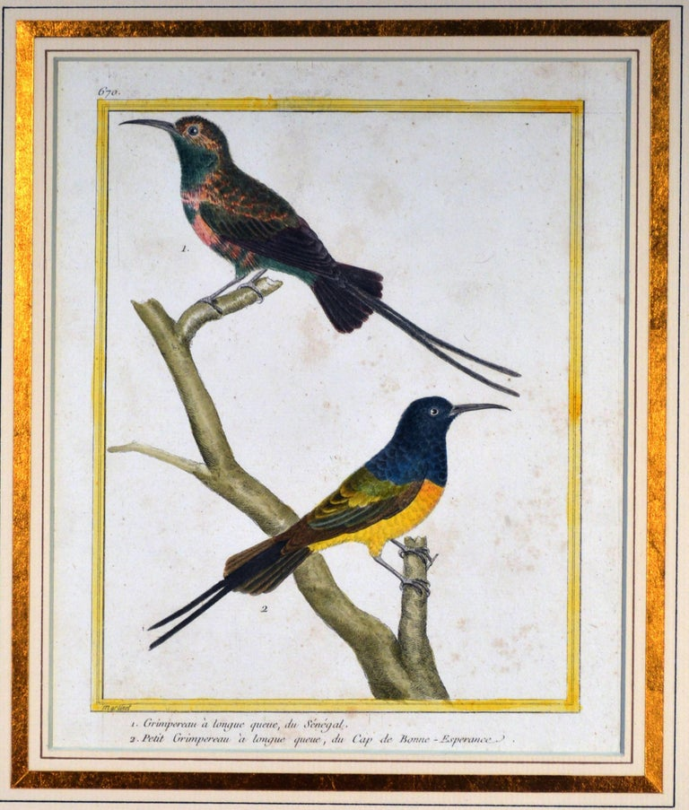 French Francois Nicholas Martinet Bird Engravings, Set of Six, circa 1770 For Sale