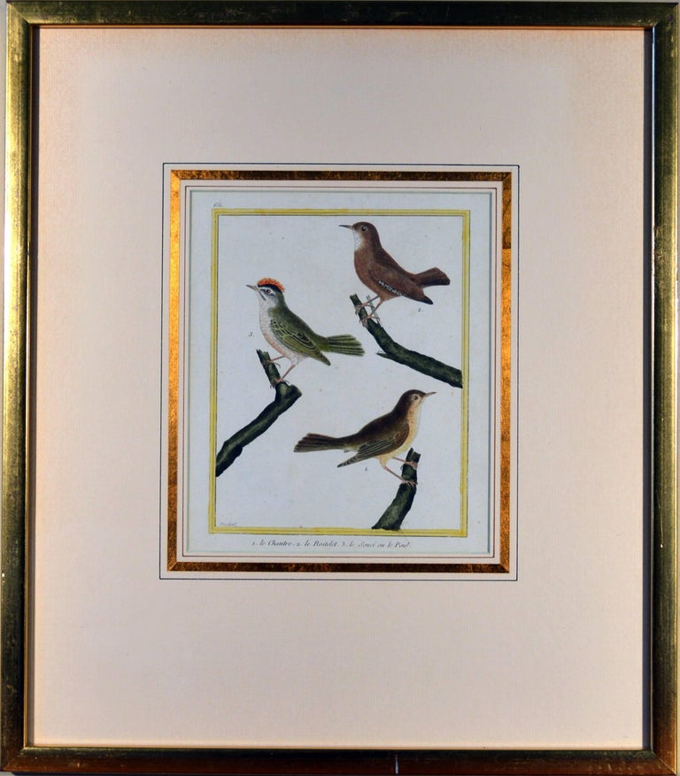 Francois Nicholas Martinet Bird Engravings, Set of Six, circa 1770 In Good Condition For Sale In Downingtown, PA