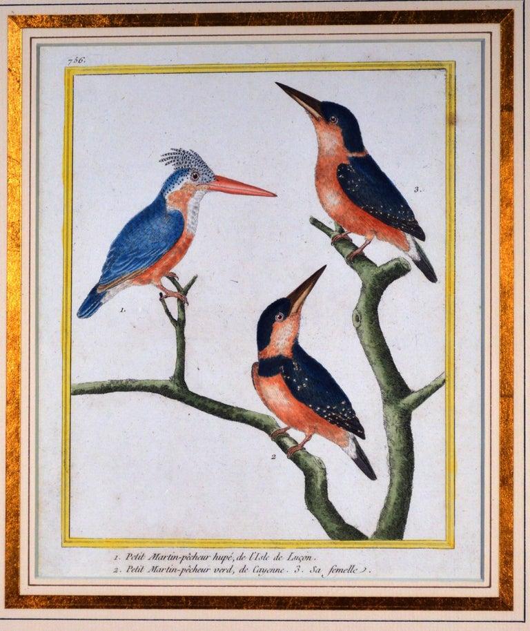Late 18th Century Francois Nicholas Martinet Bird Engravings, Set of Six, circa 1770 For Sale
