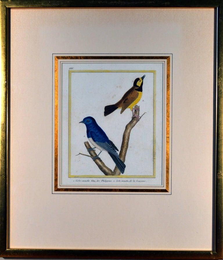 Paper Francois Nicholas Martinet Bird Engravings, Set of Six, circa 1770 For Sale