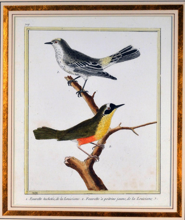 Francois Nicholas Martinet Bird Engravings, Set of Six, circa 1770 For Sale 1