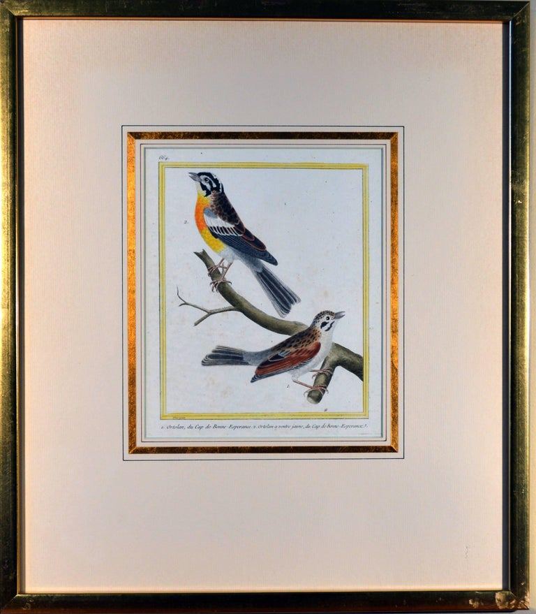 Francois Nicholas Martinet Bird Engravings, Set of Six, circa 1770 For Sale 2
