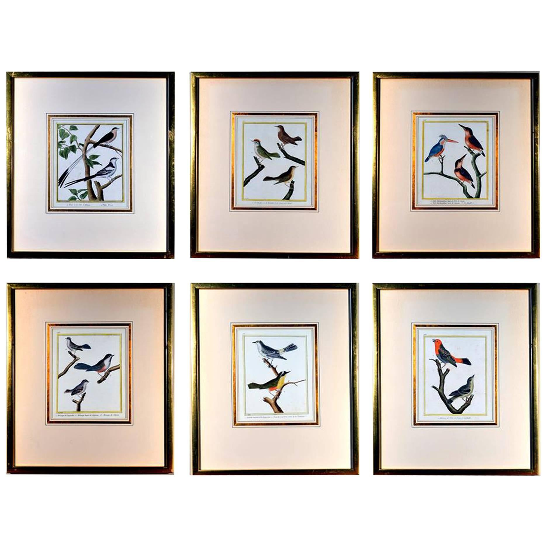 Francois Nicholas Martinet Bird Engravings, Set of Six, circa 1770