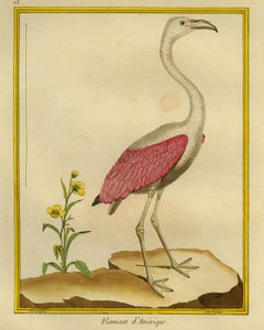 American Flamingo by Martinet - Handcoloured engraving - 18th century