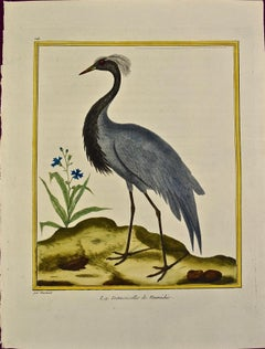 "An 18th Century Hand Colored Engraving of a Crane ""La Demoiselle"" by Martinet"