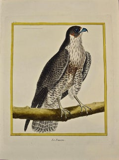 "An 18th Century Hand Colored Engraving of a Falcon ""Le Faucon"" by Martinet"