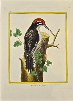 "An 18th Century Hand Colored Engraving of a Woodpecker ""Pictachete"" by Martinet"