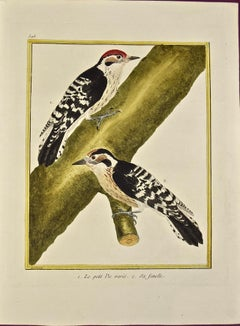 "An 18th Century Hand Colored Engraving of Woodpeckers ""Le Petit Pic"" by Martinet"